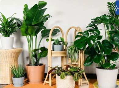مشاهده محصولات گل و گلدان و گیاه طبیعی